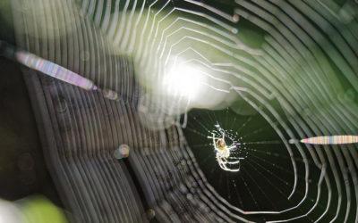 Что такое  Spider web и как она поможет выучить слова к HSK