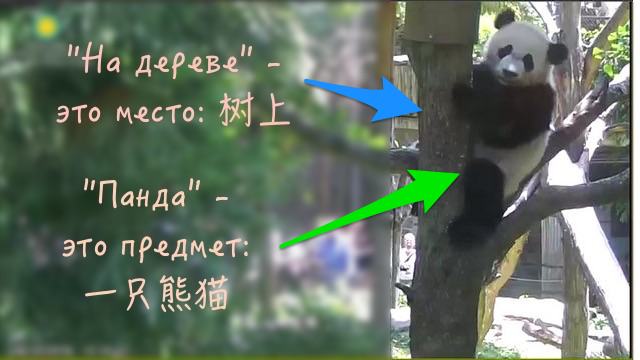 панда_на_дереве
